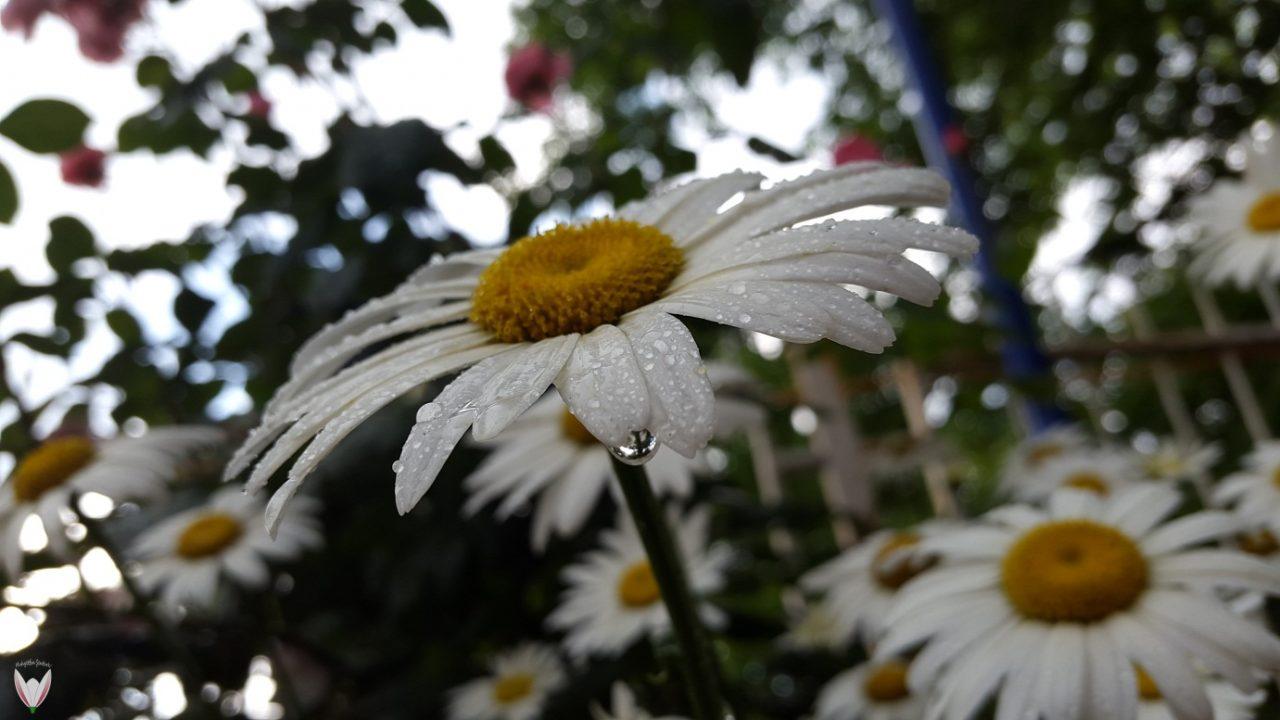 Bitkiler-Hava-Tahmininde-Bulunabilir-Mi-1280x720.jpg