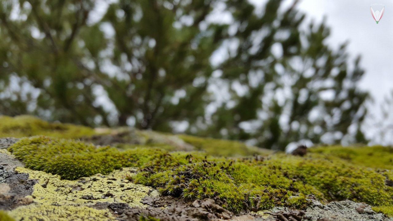 Bitkiler-Jeolojik-Araştırmalarda-Kullanılabilir-Mi-1280x720.jpg
