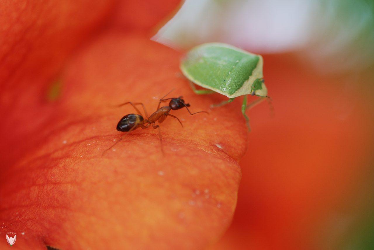 Karınca-Kararınca-1280x857.jpg