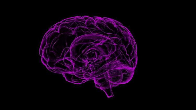 bu-da-amigdala.jpg