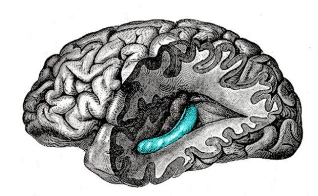 Hipokampüs