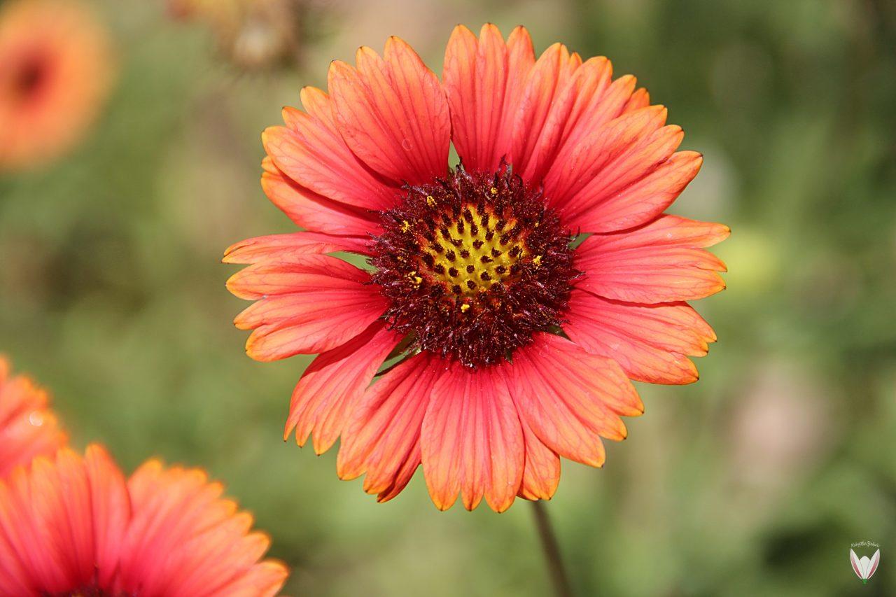 Bitkiler-De-Eğitilir-Mi-1280x853.jpg